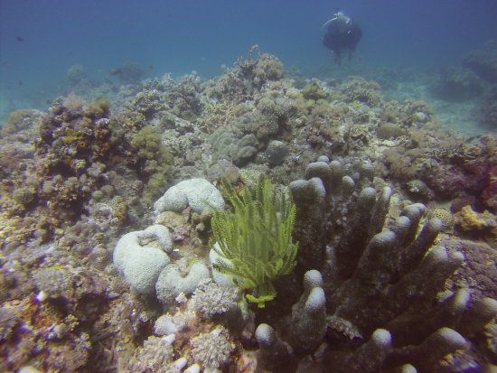Portulano Dive Resort: photo4.jpg