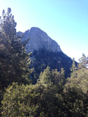 Idyllwild, CA: View from the back of the lodge.