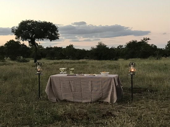 Ngala Private Game Reserve 사진