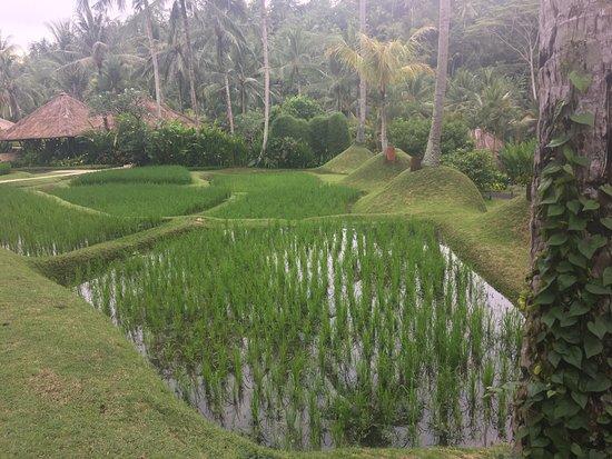 Sayan, Indonesien: photo4.jpg
