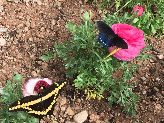 butterfly & cactus - Picture of Desert Botanical Garden