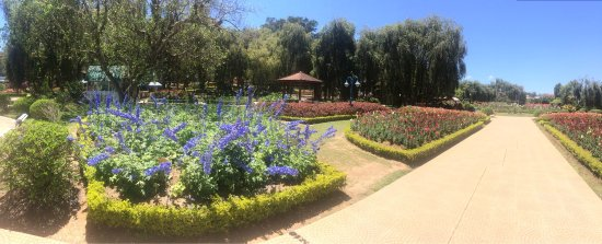 Dalat Flower Park: photo9.jpg