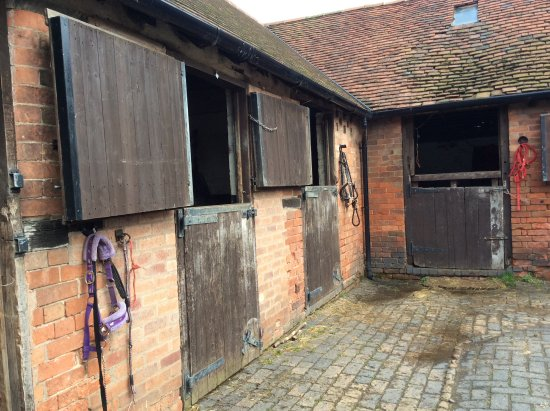 Bickenhill, UK: Horses are in stables at night to say hello to.