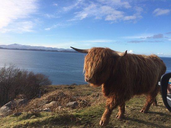 The Torridon Inn: Local wildlife