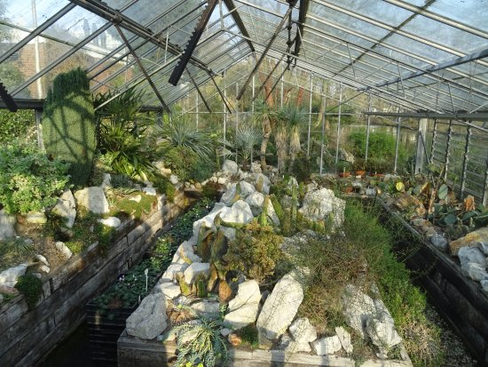 Botanische Tuin Amsterdam : Botanische tuin zuidas buitenveldert picture of botanische tuin