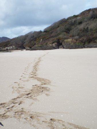Beach at PortMeirion