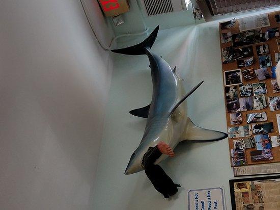Photo of American Restaurant Fish Shack at 2862 Ne 17th Ave, Pompano Beach, FL 33064, United States