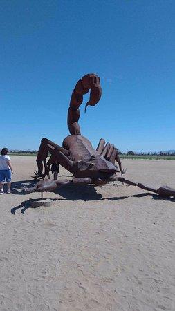 Borrego Springs, CA: Scorpion in Galleta Meadows