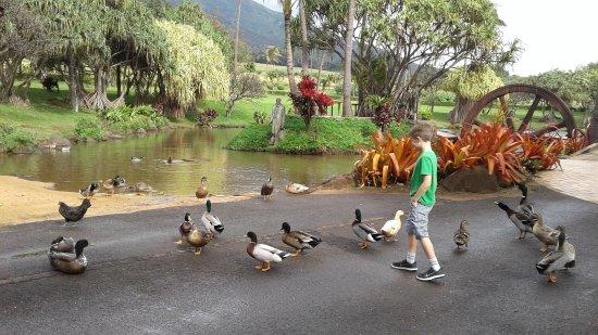 Wailuku, هاواي: They got a duck pond