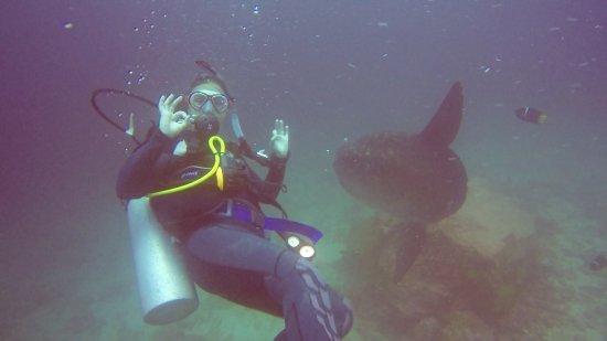 Scuba Iguana : photo0.jpg