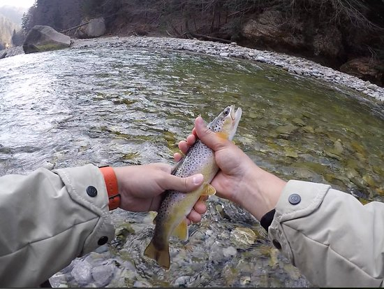 Вильдерсвиль, Швейцария: My second brown trout