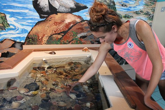 Boothbay Harbor, ME: Touch Tank