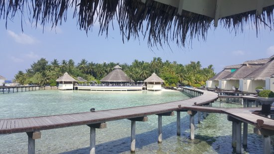 Ellaidhoo Maldives by Cinnamon: From our room looking at the pool/bar area.