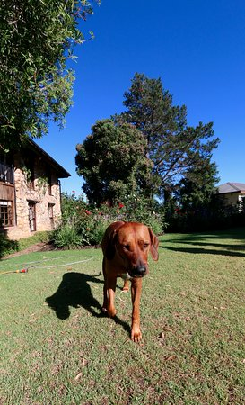 Narnia Farm Guest House: Wonderful pup :)