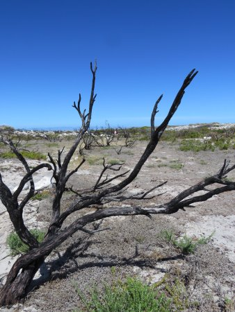 Cape Peninsula National Park, Zuid-Afrika: Thomas T Tucker Shipwreck Trail