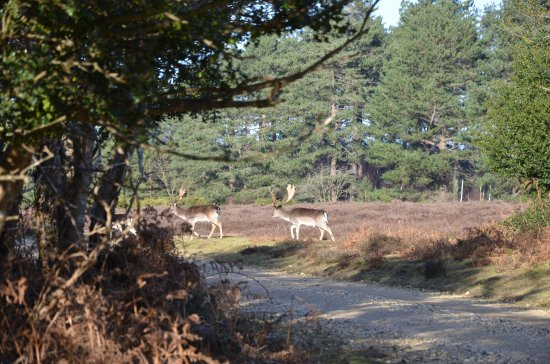 Bolderwood Deer Sanctuary: By the car park in February