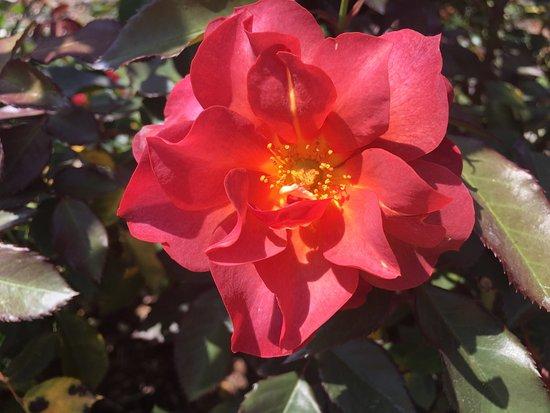 Tyler Rose Garden: photo0.jpg