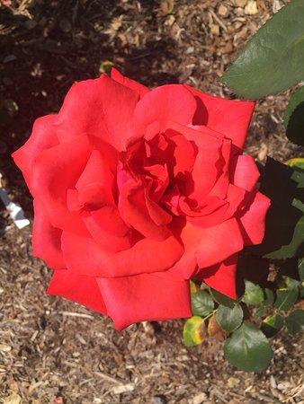 Tyler Rose Garden: photo2.jpg