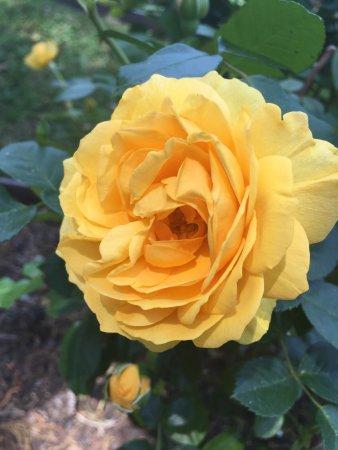 Tyler Rose Garden: photo3.jpg