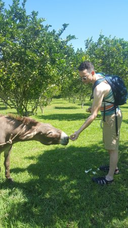 Table Rock Jungle Lodge: They have donkeys on the farm and you can feed them!
