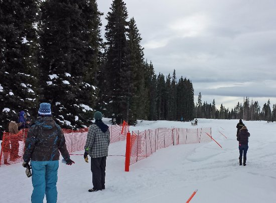 Dogs coming finishing dog race on Grand Mesa