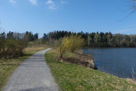 Nature Reserve Eselschwanz: 25. März 2017 Am alten Rhein um die Eselschanze bei St- Margarethen SG