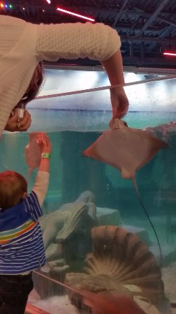 Layton, UT: Feeding a stingray. They eat right out of your hand.