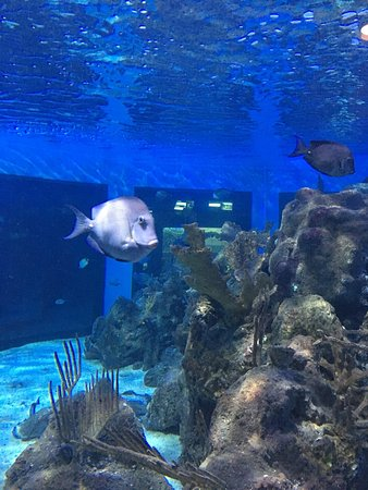 John Pennekamp Coral Reef State Park: photo0.jpg