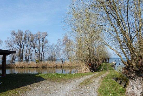 Vorarlberg, Oostenrijk: 25. März 2017 in Gaissau  Vlbg A  am Bodensee - Naturschutzgebiet