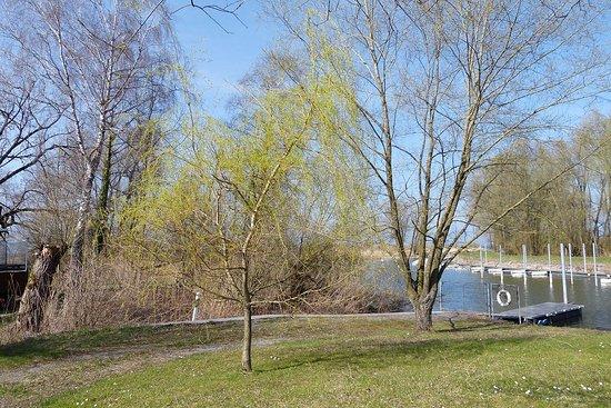 Vorarlberg, Austria: 25. März 2017 in Gaissau  Vlbg A  am Bodensee - Naturschutzgebiet