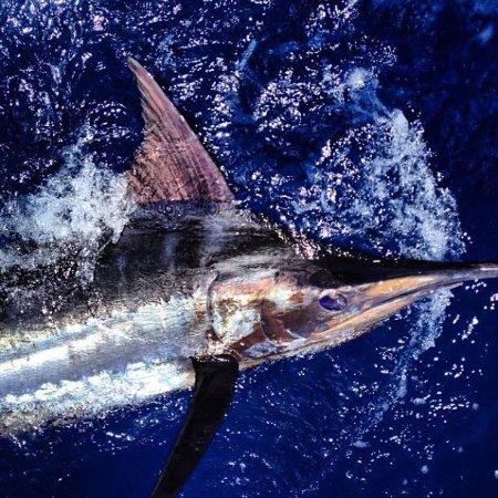 Beaufort, NC: 1st Blue Marlin on the Wraith