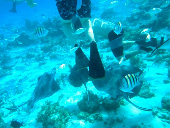 George Town, Grand Cayman: snorkeling with stingray and fish