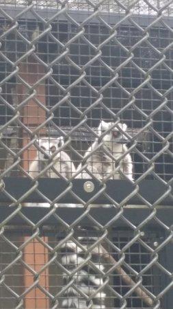 Duke Lemur Center: Lemurs