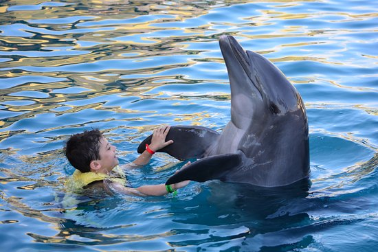 """Dolphinaris Cozumel: """"Dancing"""" with a dolphin"""