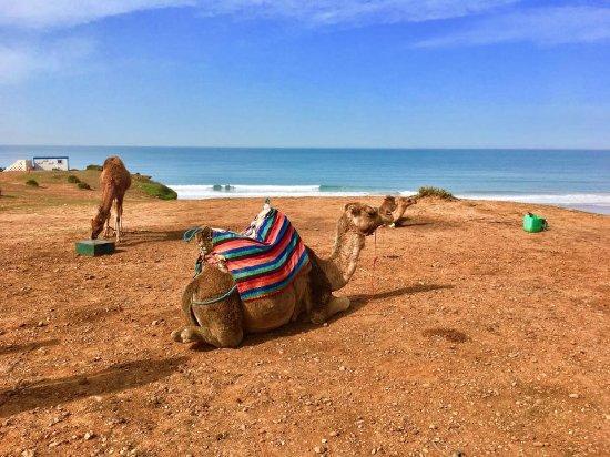 Aziz Benami Private Guide Tangier : Camels