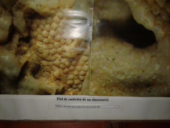 Museo del Lago Gutierrez : corte de un huevo de dinosaurio, donde se aprecia la piel del embrión. Nos devela el misterio de