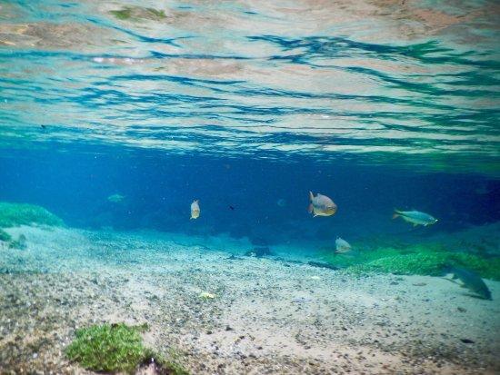 Recanto Ecológico Rio da Prata: photo1.jpg