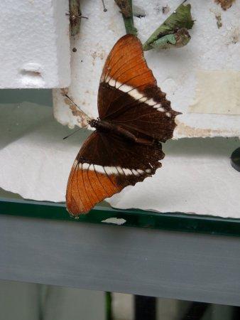 Jardin Botanico de Medellin: A butterfly in the butterfly garden