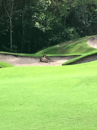 Tewantin-Noosa Golf Club: Do I get a drop here?