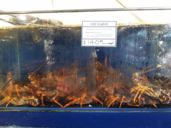 Auckland Region, New Zealand: Crayfish in tank