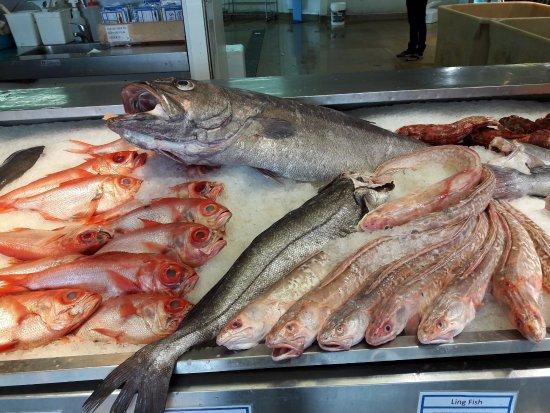 Auckland, Selandia Baru: Fishes