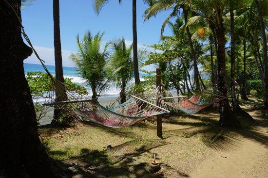 Carate, Коста-Рика: Hammocks