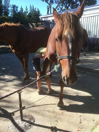 Oxford, Nueva Zelanda: Zea getting a pedicure