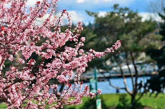 Kirkland, WA: Spring is here