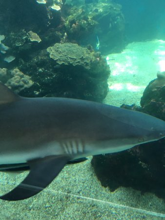Aquarium des Lagons Nouvelle Caledonie: There are a number of sharks
