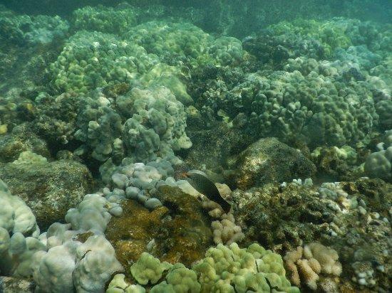 Pahoa, HI: High tide Kapoho tide pools close to the surf March 2017 -4