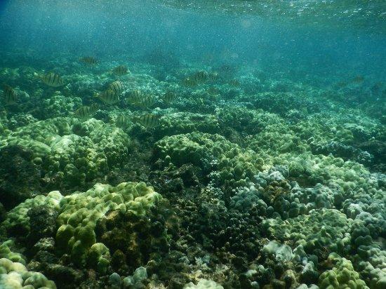 Pahoa, HI: High tide Kapoho tide pools close to the surf March 2017 -5