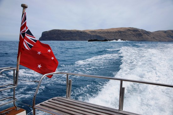 Akaroa Dolphins: A fascinating cruise circumventing Akaroa harbour and out into the ocean