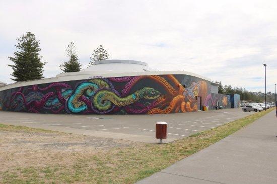 Napier, Nya Zeeland: National Aquarium 6