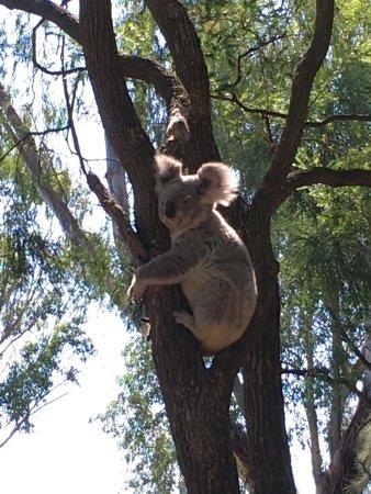 Blacktown, Australia: photo7.jpg